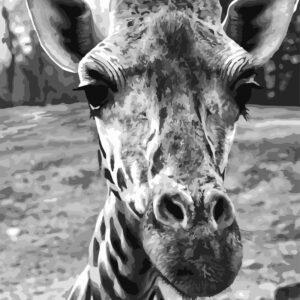 schilderen op nummer giraffe