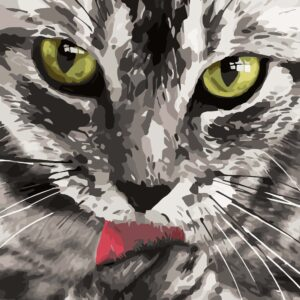 schilderen op nummer kat milou